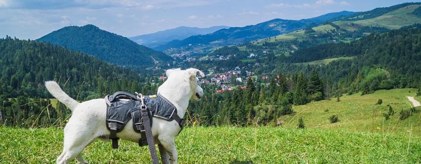 Góry z psem: Szczawnica – Schronisko pod Durbaszką (Małe Pieniny)