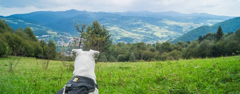 W góry z psem – opisy tras [PORADNIK]