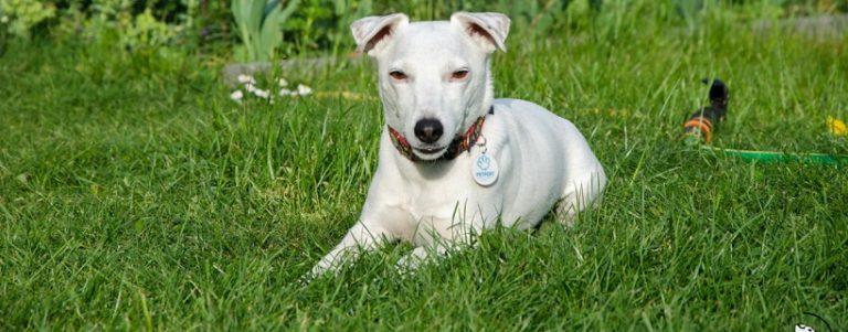 Jaki piękny szicu, czyli pokręcone rasy psów | TOP 10