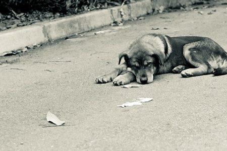 Porzucenie psa – czym jest, kary, postępowanie
