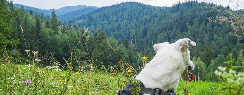 Góry z psem: z Krośnicy na Lubań z psem