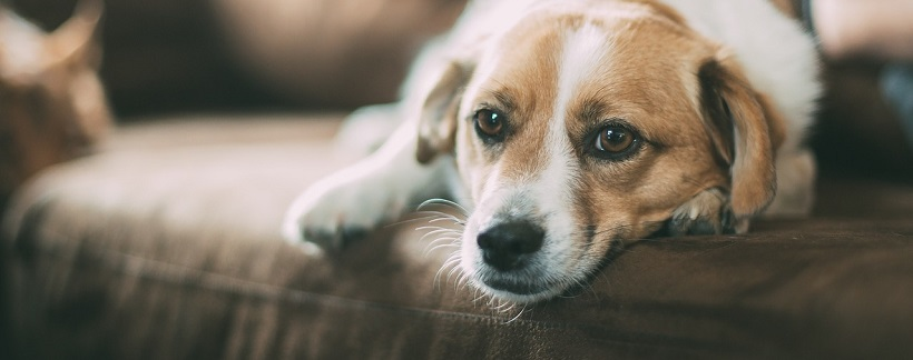 Pies ze schroniska – problemy. Jak ich uniknąć?