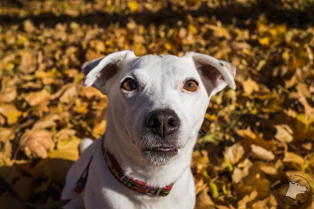 mały biały, bezpieczeństwo psa