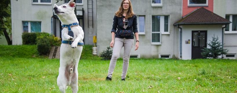 Świadome psie ciało: dostawianie | #psiaktywnygrudzień