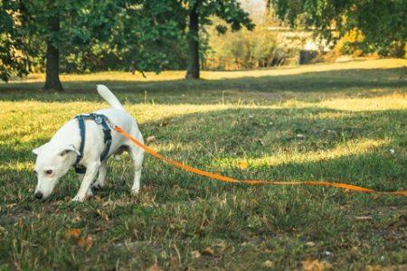 Bezpieczeństwo psa na spacerze