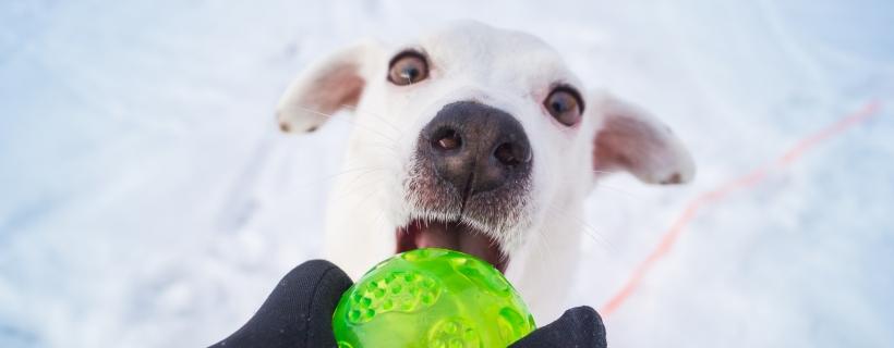 Najgłupsze mity o psach – cz. 2   TOP 10