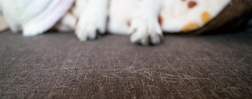 Jak utrzymać czystość w domu, w którym mieszkają zwierzęta?
