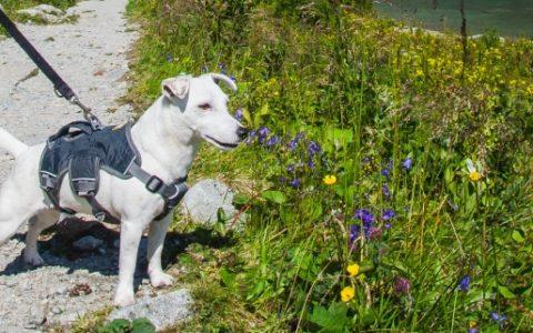 Psy w Tatrach Słowackich: Rzeczniczka Praw Zwierząt przeciwna zakazowi