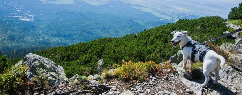 Pies w Tatrach Słowackich: minister wstrzymuje projekt