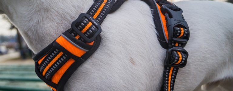 Test: szelki dla psa TrueLove Front Range