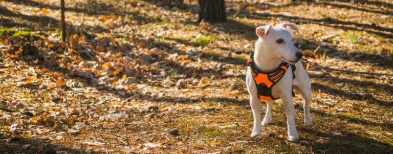 Wychowanie psa, czyli sztuka odpuszczania