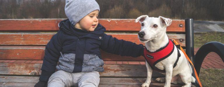 Dziecko i pies – nasze trzy zasady