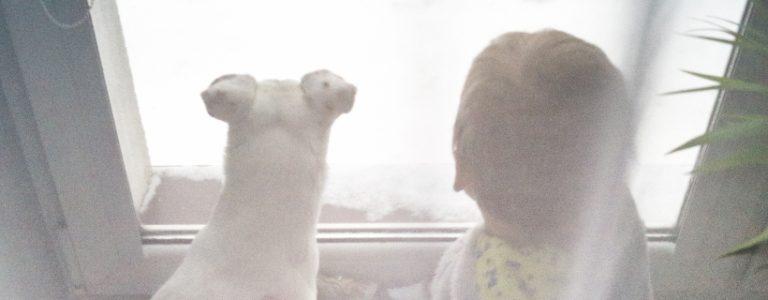 Pies i dziecko – podobieństwa   TOP 10