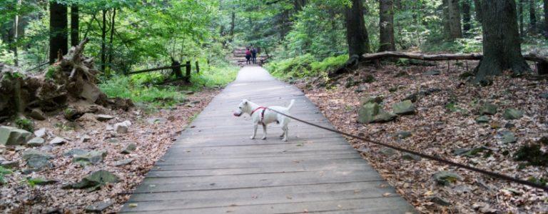 Góry Świętokrzyskie niedostępne dla psów