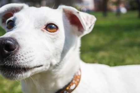 Karmy dla psów – na co zwracać uwagę?