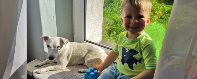 Relacja psa i dziecka – jak ją zepsuć | PORADNIK