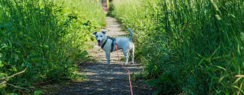 Trening przed górami: przygotowanie fizyczne psa