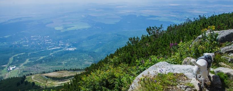 Góry z psem: Hrebienok – Skalnaté pleso