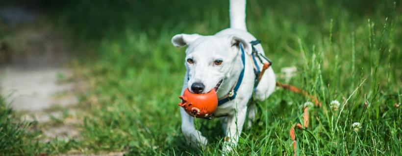 Komentarze, które słyszysz, gdy bierzesz psa | TOP 10