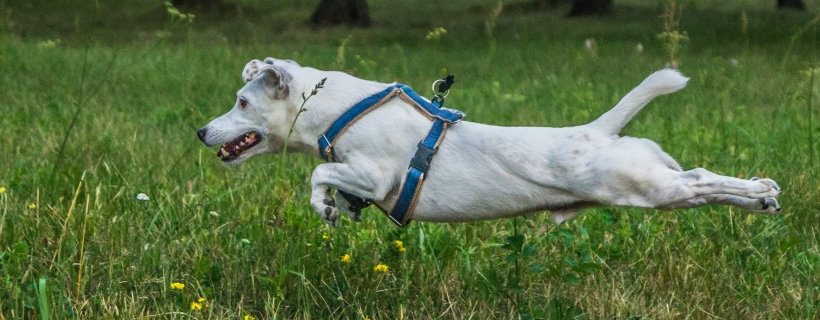 Ogon psa – dziesięć niesamowitych ciekawostek