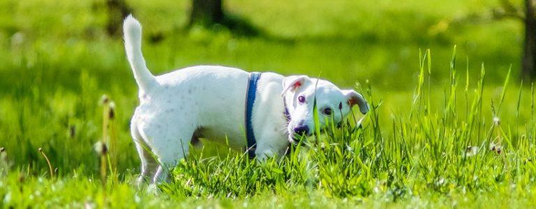 Pies je trawę, bo boli go brzuch? [Zagryzamy mity #5]