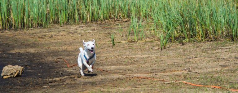 Co robić w Dzień Psa według Małego Białego | TOP 10
