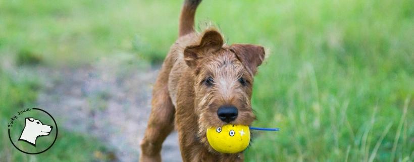 Jak mówić do psa, żeby nas słuchał?
