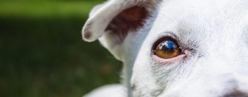 Jak widzi pies? Fascynujące ciekawostki o psim wzroku | TOP 10