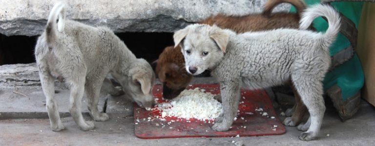 Pies a higiena – czym można zarazić się od psa i… zarazić jego?