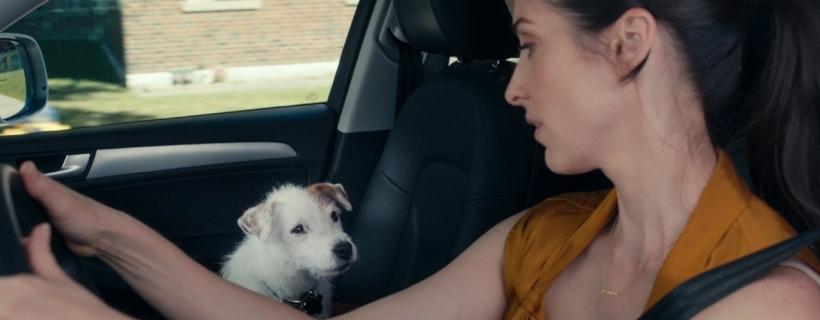 Netflix – 5 moich ulubionych seriali (z psami w tle!)
