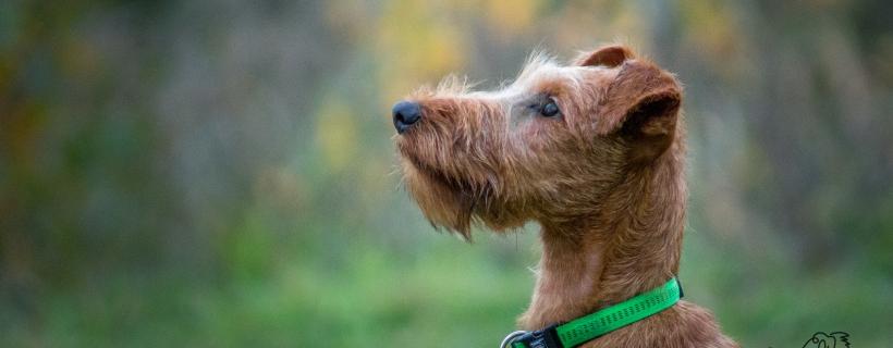 Świadome psie ciało: cofanie | #psiaktywnygrudzień