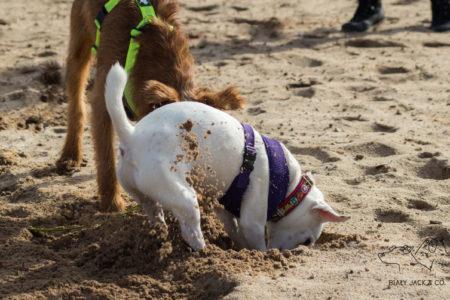 Nasze sprawdzone akcesoria dla psów | TOP 10
