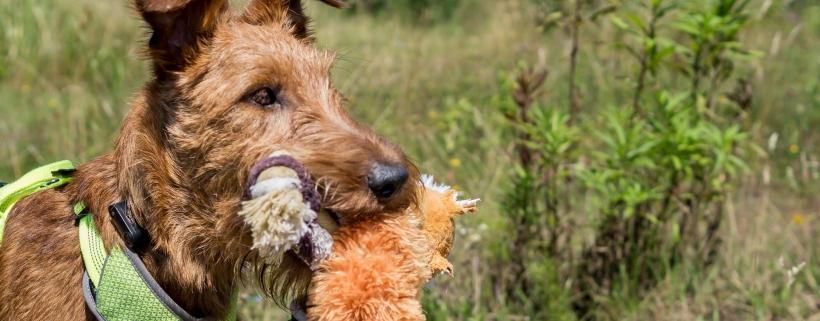 Zabawki dla psów – nasze hity! Sprawdź je
