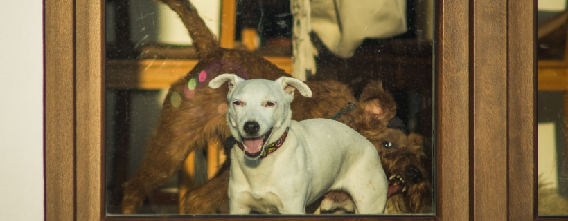 Spacer z psem – tych pięciu rzeczy nie rób drugiemu psiarzowi!