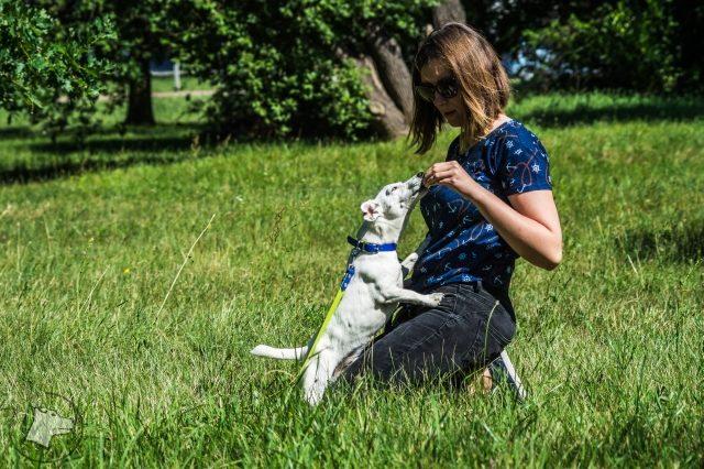 mity o żywieniu psów