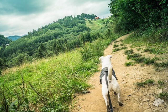 w góry z psem, małe pieniny