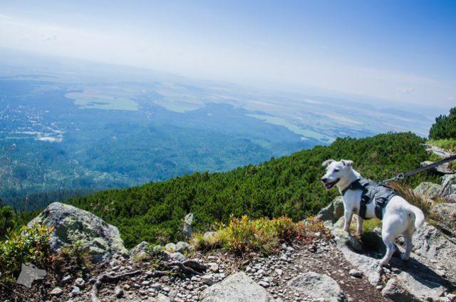 w góry z psem