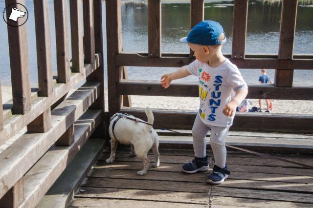 spacer z psem i małym dzieckiem