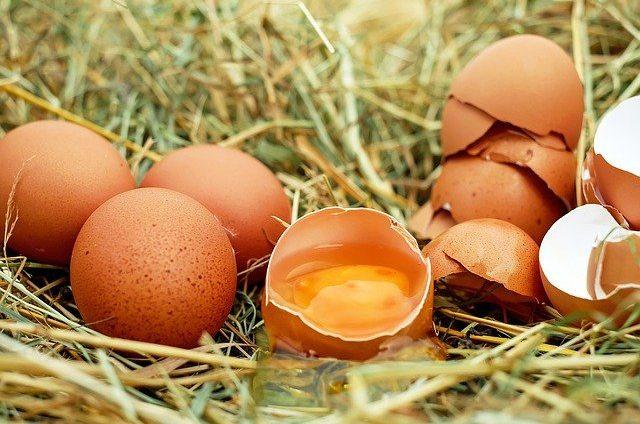 czy pies może jeść jajko