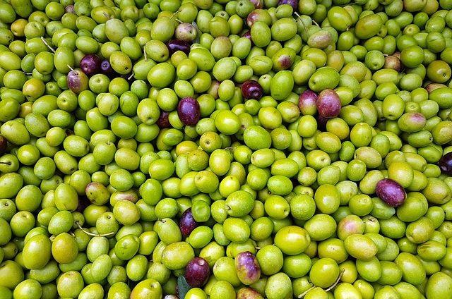 czy pies może jeść oliwki