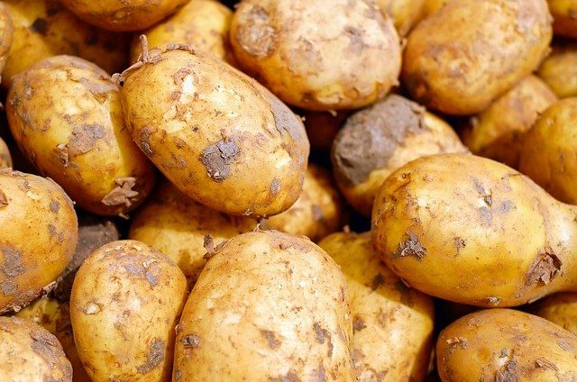 czy pies może jeść ziemniaki